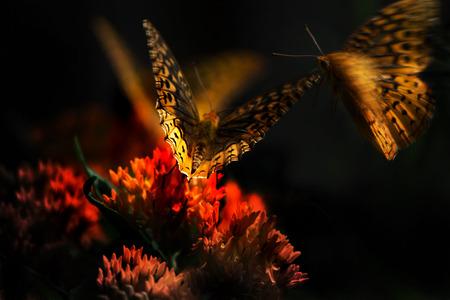 Flying butterflies clustering around orange flower Banco de Imagens