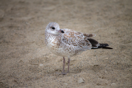 Seagull standing on sand