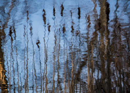Cat tails reflected in water