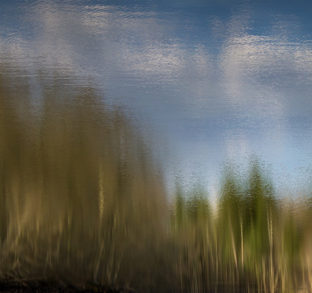 trees reflecting in water with cloudy blue sky Banco de Imagens