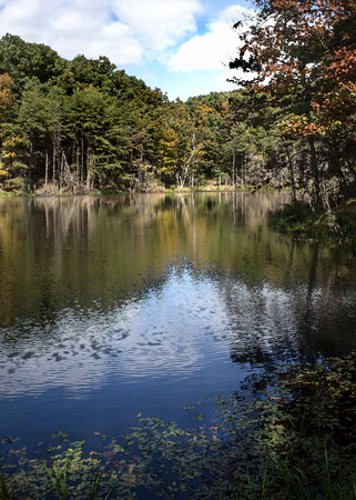 Woodland lake in late summer