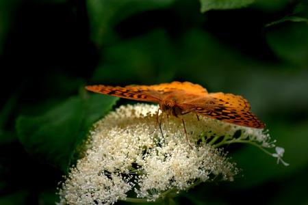 Butterfly on white flower Banco de Imagens
