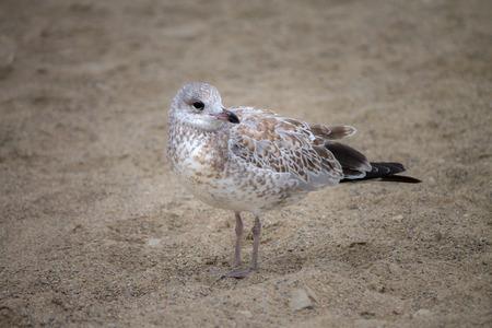 Seagull standing on beach
