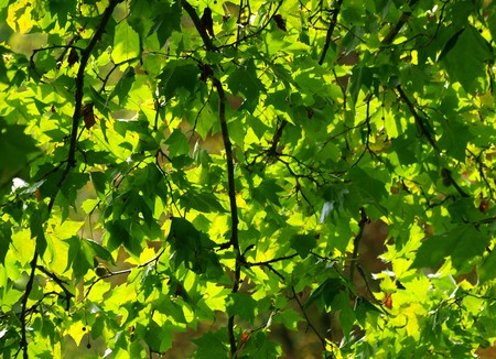 late summer: green leaves in late summer atmosphere
