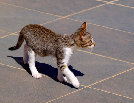 young cat moving carefully on a terrace photo