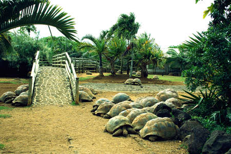 Large amount of tortoises in the tropical zoo