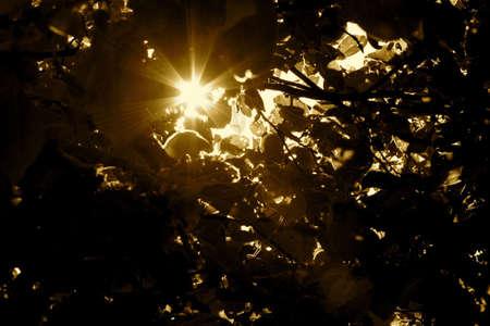 Sun rays shining through the branches