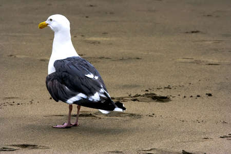 Seagull staying on the sand Stock Photo