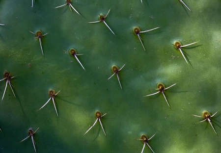 Background picture of green cactus texture