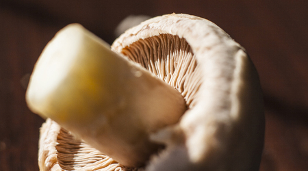underside: Close-up of underside of champignon mushroom with seen lamellae and stem