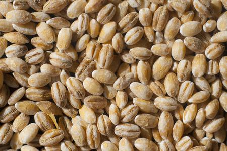 pearl barley: Close-up of pearl barley groats - food background Stock Photo