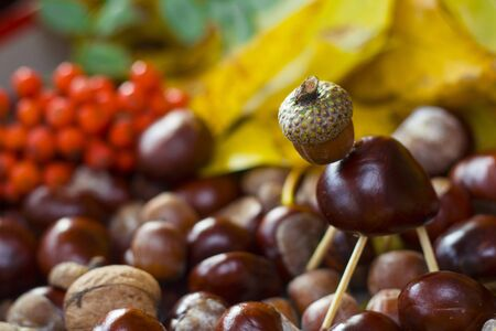 Animal made of horse chestnut seed, acorn and safety maches on defocused background made of autumn yellow leaves horse chestnut seed, acorns and rowanberry