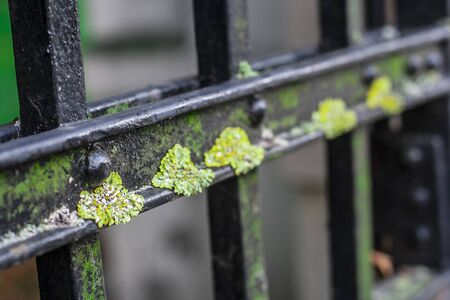 Close up on green moss overgrowing elements of very old iron gate Banque d'images - 137891142