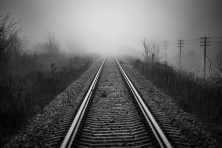 Perspective of railway track disappearing in mist in foggy morning with cat in distance trying to cross rail line - monochrome image