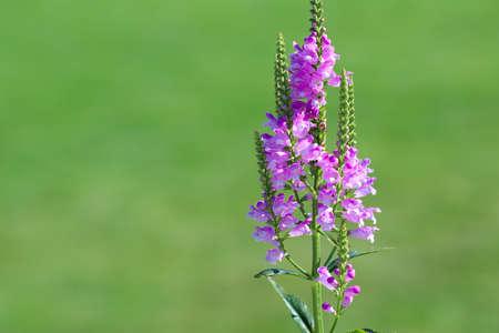 Violet flowers on green background of public park