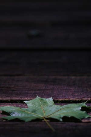 Single maple leaf on dark wooden plank background with lots of copy space Zdjęcie Seryjne