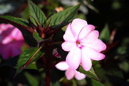Violet flowers on flowerbed in public park Zdjęcie Seryjne