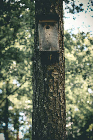 Wooden birdhouse hangt on pine tree trunk in the forest