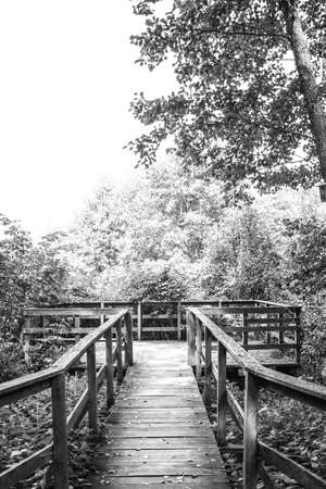 Wooden footpath leads through bushes and swampland in the forest, black and white image Zdjęcie Seryjne