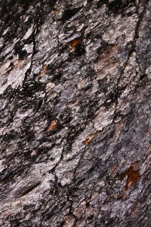 Tamarind bark