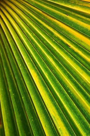 Coconut leaf Stock Photo