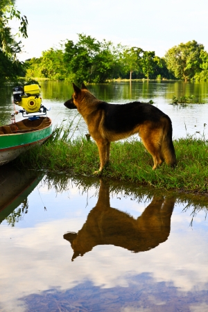 Training a hunting dog on the water photo