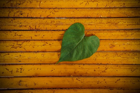 Heart leaf on bamboo