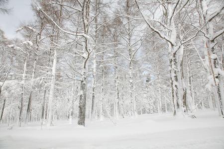 Sneeuw bos Stockfoto