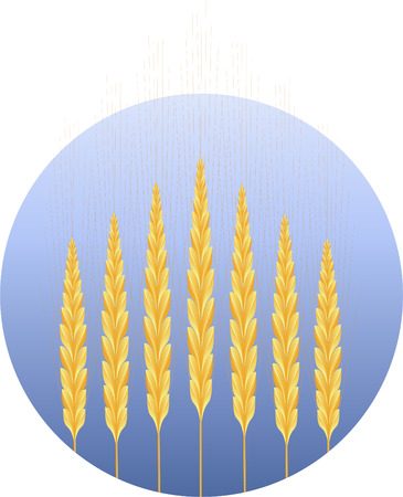winter wheat: Wheat icon, on round, isolated on white, eps8 format Illustration
