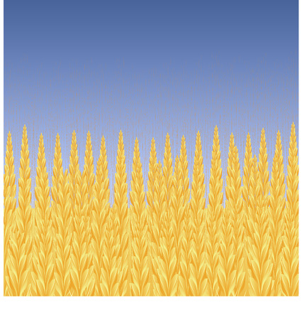 Wheat field, blue sky, vector background, 8 format Vector