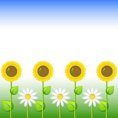 Background with sunflowers and daisy, vector, 8 format Vector