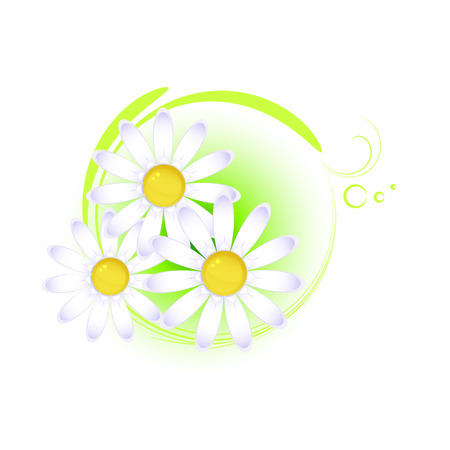 Floral design element with camomile, isolated on white, vector, 8 format Vector