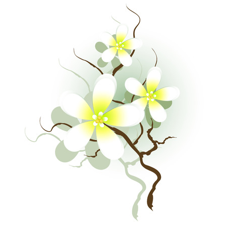 Branch with white flowers, floral design element, vector, isolated on white, 8 format Vector