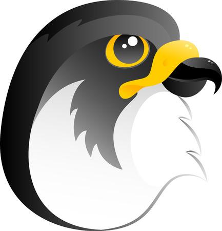 falcon: Falcon, vector, isolated on white Illustration
