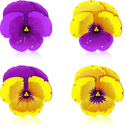 violette: Viola, flowers, isolated on white, vector, 8 format