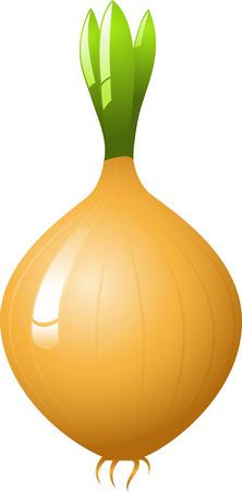 husk: Onion, vector, isolated on white Illustration