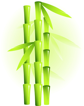 Vector image of bamboo Vector