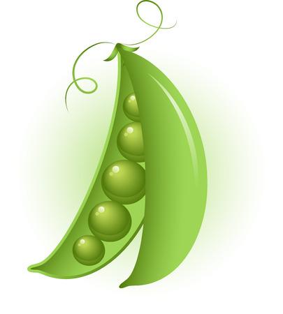 frijol: Vector de imagen de los guisantes