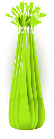 Vector image of celery, isolated