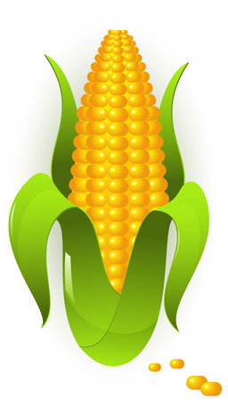 husk: Vector images of corn Illustration