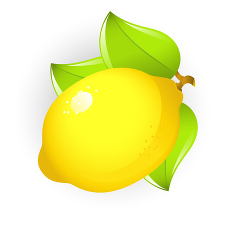 organic lemon: Vector image of lemon, isolated