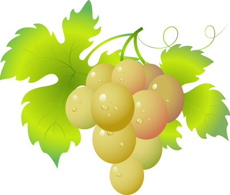 grape crop: De uva Vectores