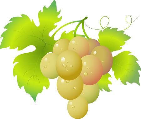 Grape Stock Vector - 5054003