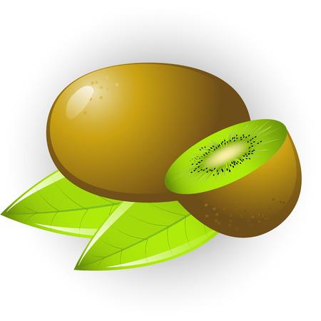 kiwi fruit: Vector de la imagen de los kiwis. Aislados. Vectores