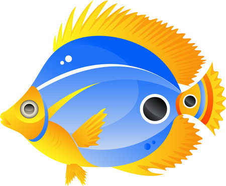 underwater fishes: Vector image of a beautiful exotic fish. Isolated on white.  Illustration