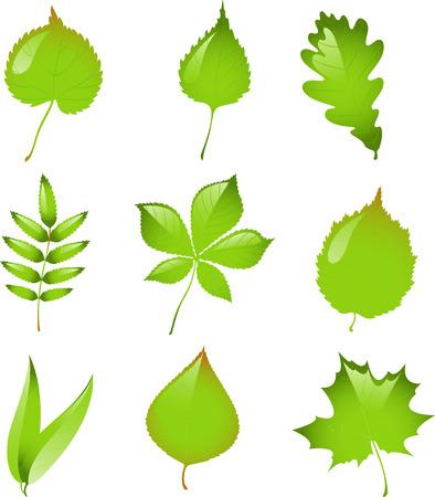 sauces: Conjunto de hojas de vector aislado. EPS 8