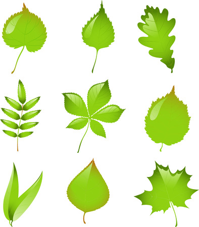 eps 8: Set of isolated vector leaves. EPS 8