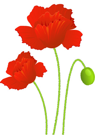 Isolated poppies. EPS 8 Vector
