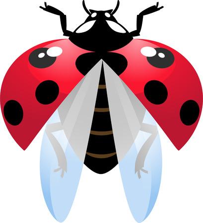 mariquitas: Ilustraci�n vectorial de Mariquita volando sobre blanco  Vectores