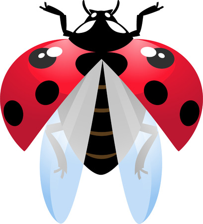 Vector illustration of flying ladybug over white Vector